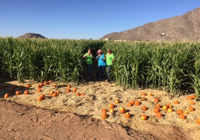 Pinal County Ed Center Us in Corn Field